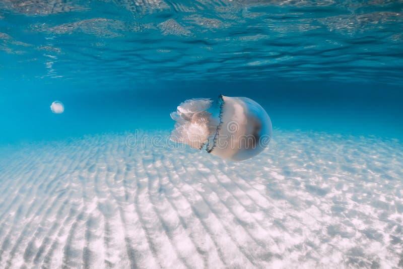 Vida marina con el submarino de las medusas en el mar azul con la parte inferior arenosa foto de archivo libre de regalías