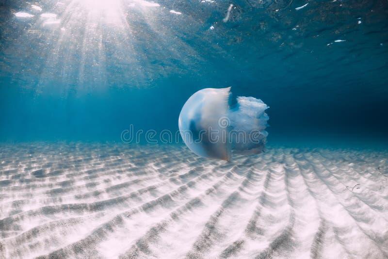 Vida marina con el submarino de las medusas en el mar azul con la parte inferior arenosa fotos de archivo libres de regalías