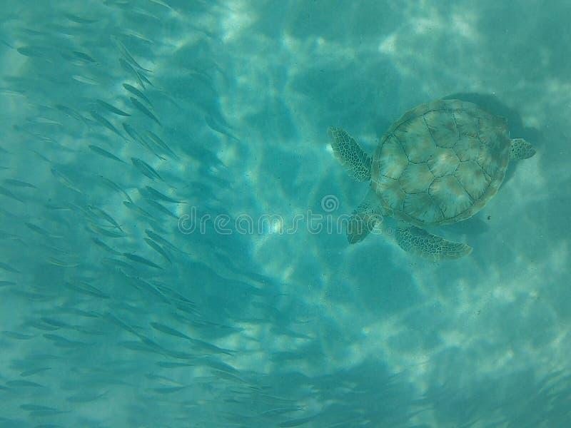 Vida marina en el agua del Caribe imagenes de archivo