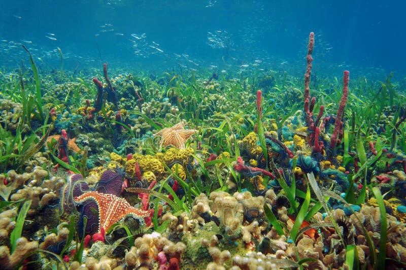 Vida marina subacuática próspera en fondo del mar tropical foto de archivo libre de regalías