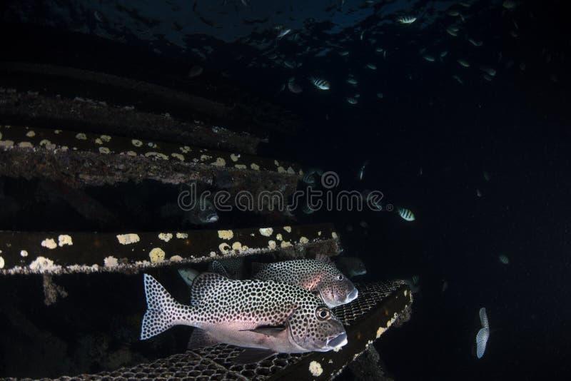 Vida marina y pescados en fondo azul marino fotografía de archivo libre de regalías