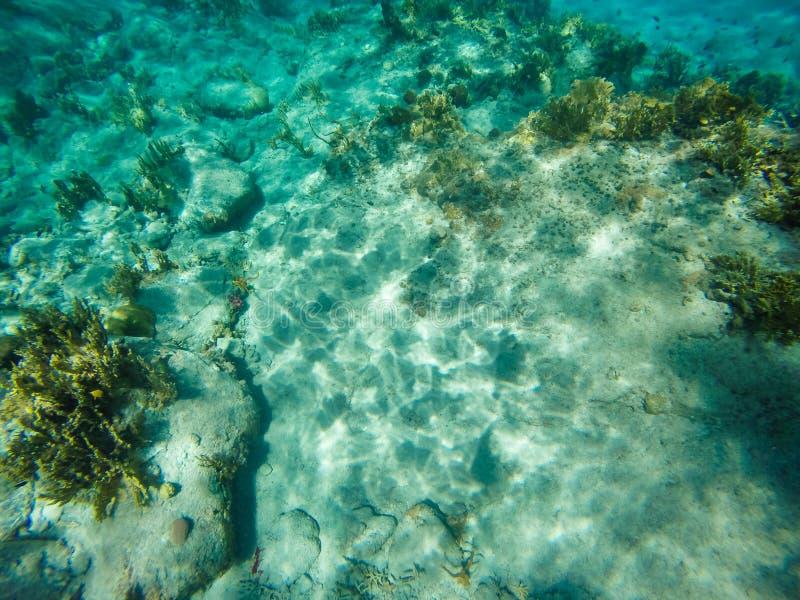 Vida marinha ao mergulhar nas ilhas das Cara?bas imagem de stock
