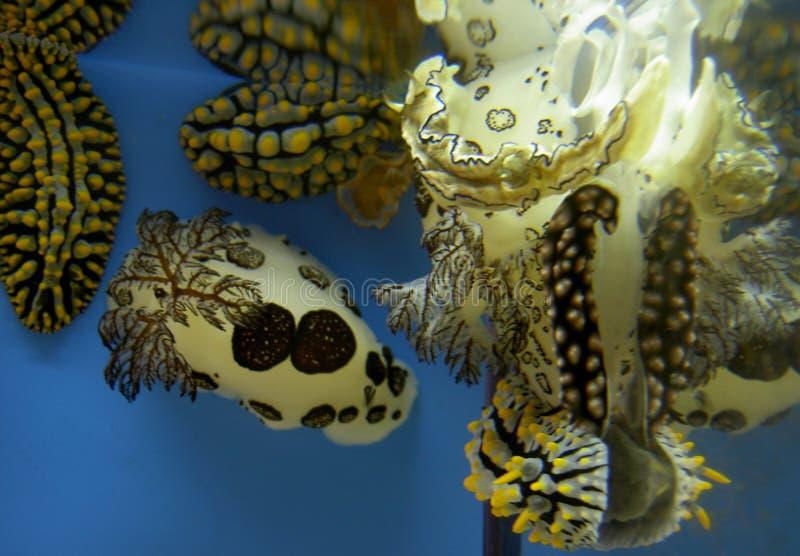 Vida marinha bonita ilustração stock
