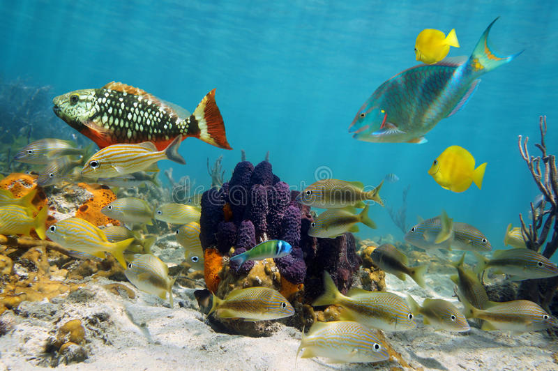 Vida marinha colorida imagem de stock royalty free