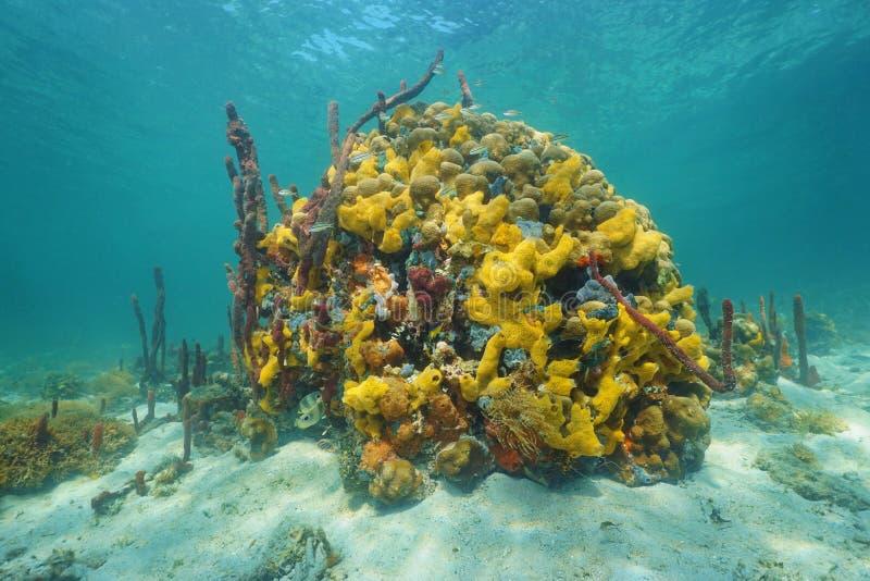 Vida marinha colorida subaquática em um recife de corais foto de stock