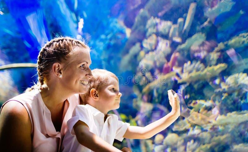 Vida marinha de observação da mãe e do filho no oceanarium fotografia de stock royalty free