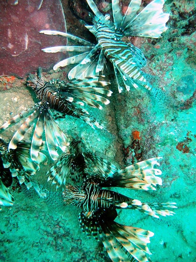 Vida marinha exótica e recife fotografia de stock