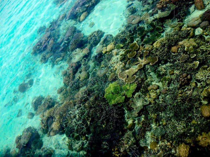 Vida marinha marinha coral tropical de mergulho do curso abstrato da aventura do conceito do fundo fotografia de stock royalty free