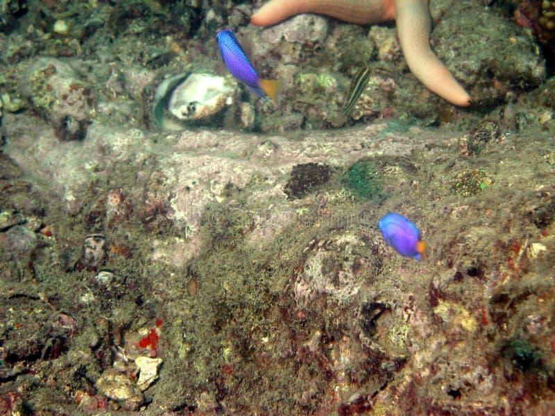 Vida marinha na parte inferior de mar   imagens de stock