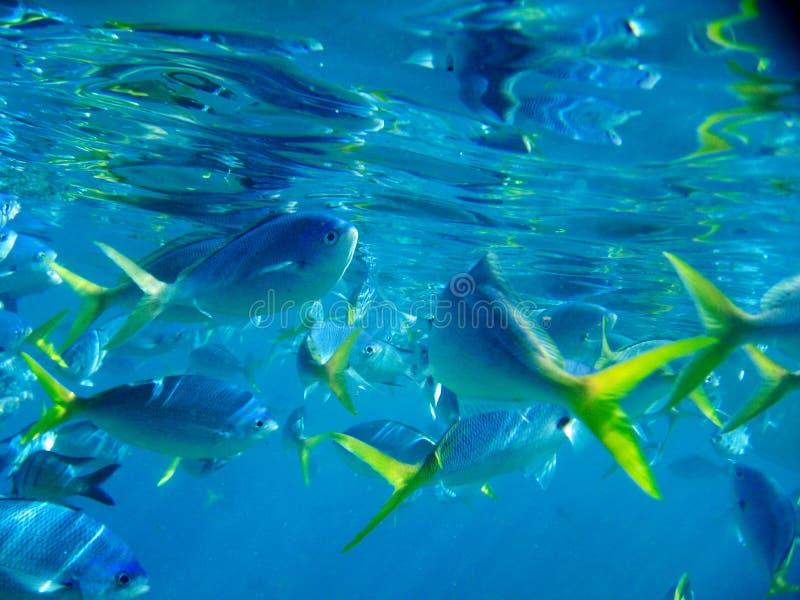 Vida marinha sob o grande recife de barreira fotografia de stock