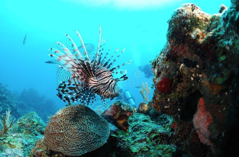 Vida marinha subaquática imagens de stock royalty free