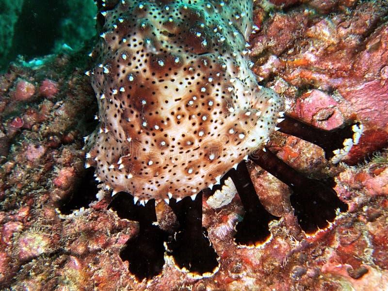 Vida marinha subaquática foto de stock
