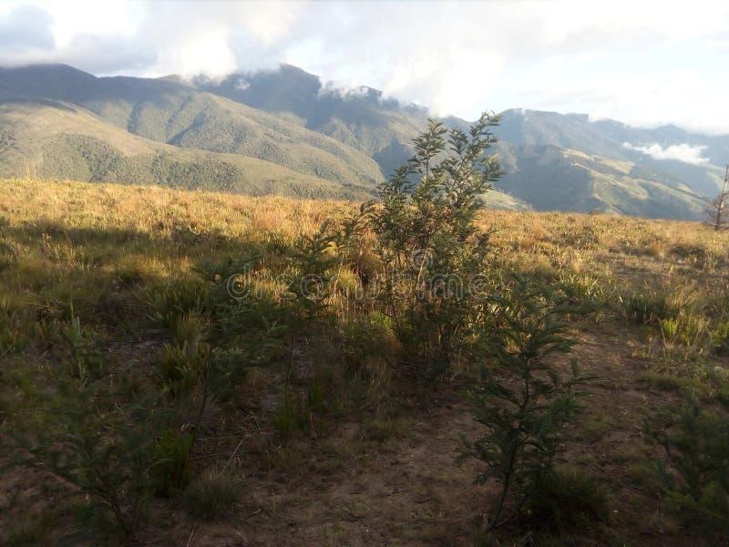 Vida naturel de la vie de montaña de buisson de montain photo stock