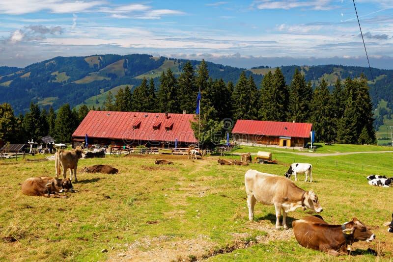 Vida no campo no cume bávaro fotografia de stock royalty free