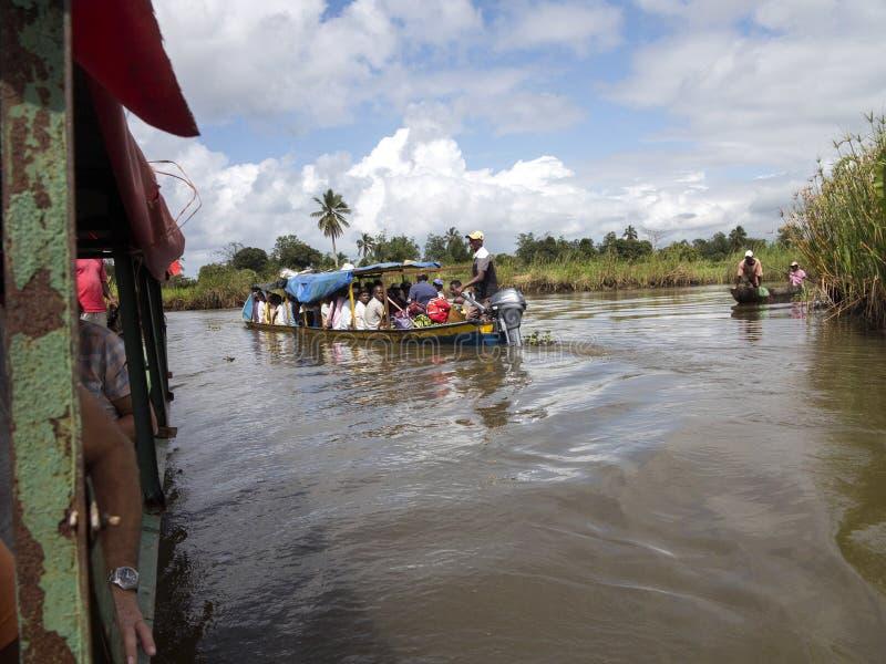 Vida no delta Antainambalana do rio, Antsiranana, Madagáscar foto de stock royalty free