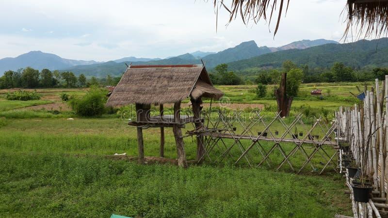 Vida normal viva no campo Tailândia fotos de stock royalty free