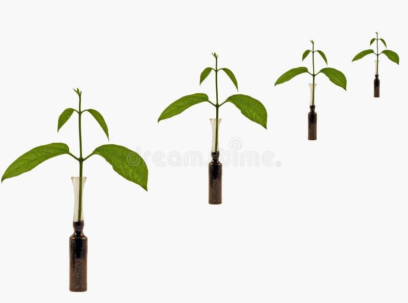 Vida nova nos clone das plantas fotos de stock