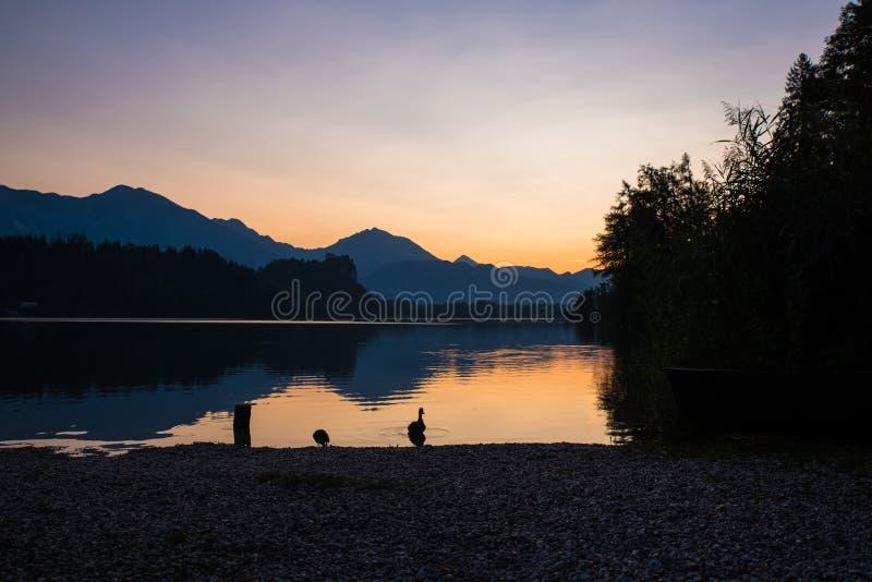 Vida pelo lago imagens de stock royalty free