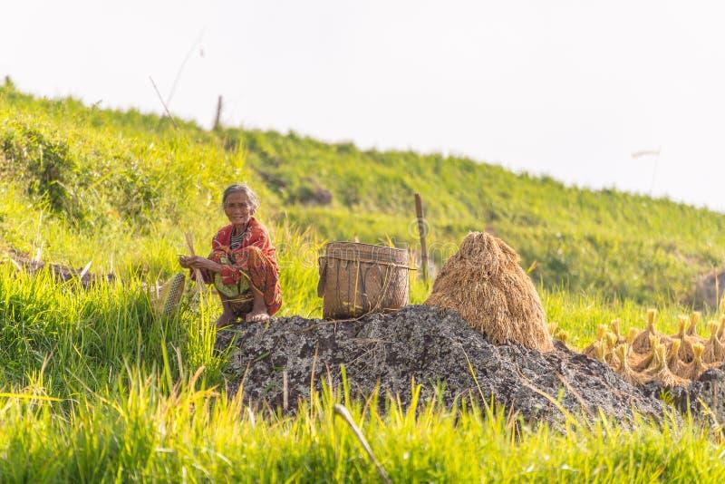 Vida rural e terra em Indonésia foto de stock royalty free