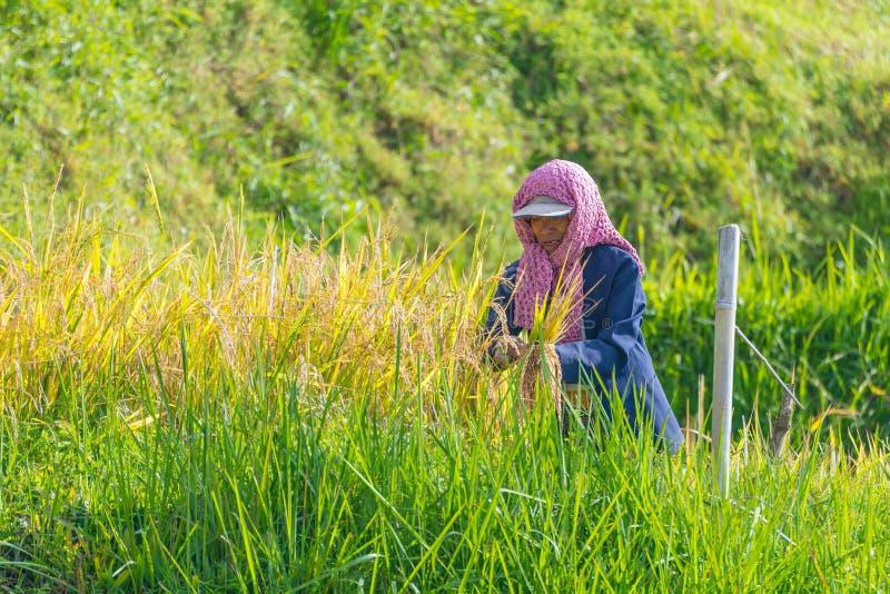Vida rural e terra em Indonésia imagem de stock royalty free