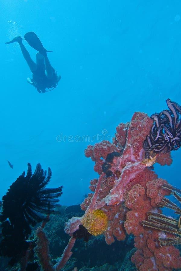 Vida sana de Coral Reef de la isla de Balicasan, Filipinas fotos de archivo libres de regalías
