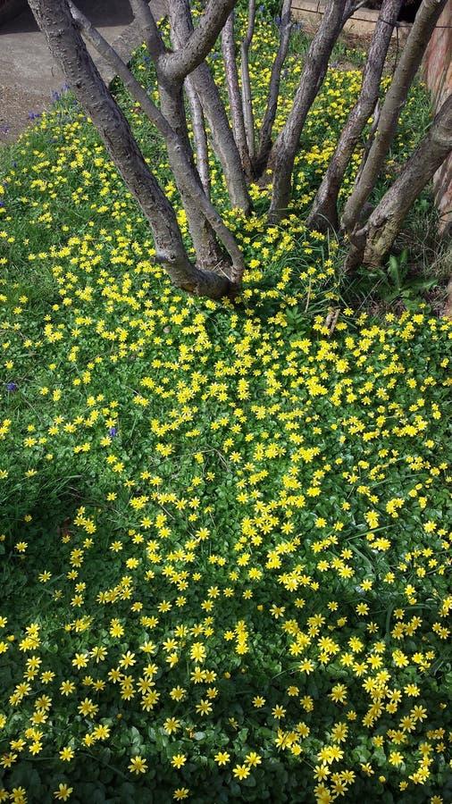 A vida selvagem pela estrada, arbustos amarelos das flores imagens de stock royalty free