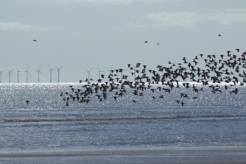 Vida silvestre, aves y turbinas eólicas marinas fotos de archivo