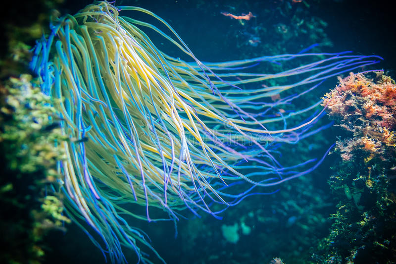 Vida subaquática imagem de stock royalty free