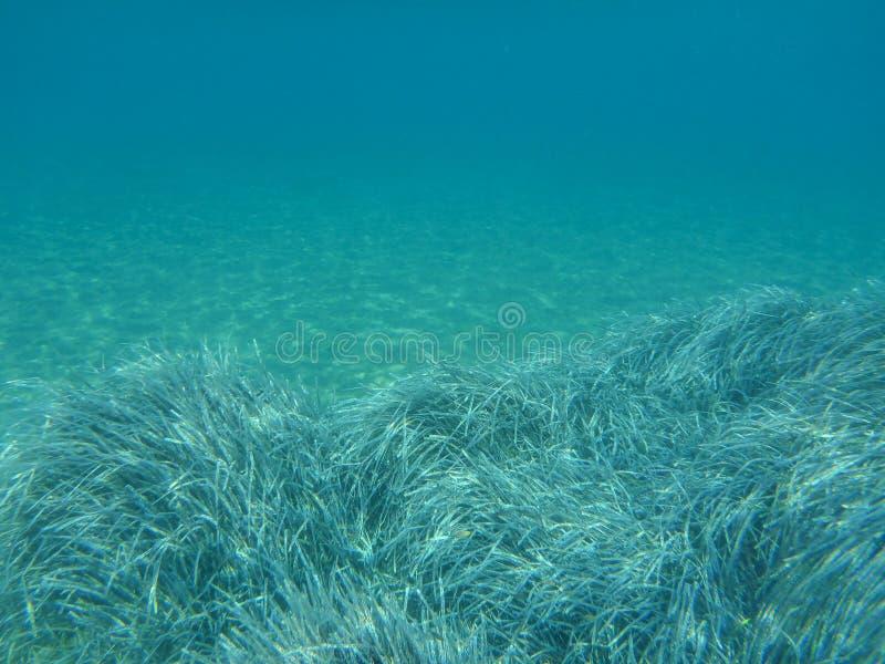 Vida subaquática - as estações de tratamento de água em Kolona dobram a ilha Cyclades Grécia de Kythnos da baía, Mar Egeu fotografia de stock royalty free