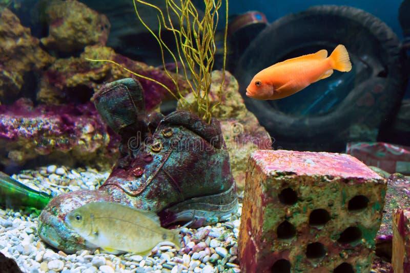 Vida subaquática de peixes marinhos imagem de stock royalty free