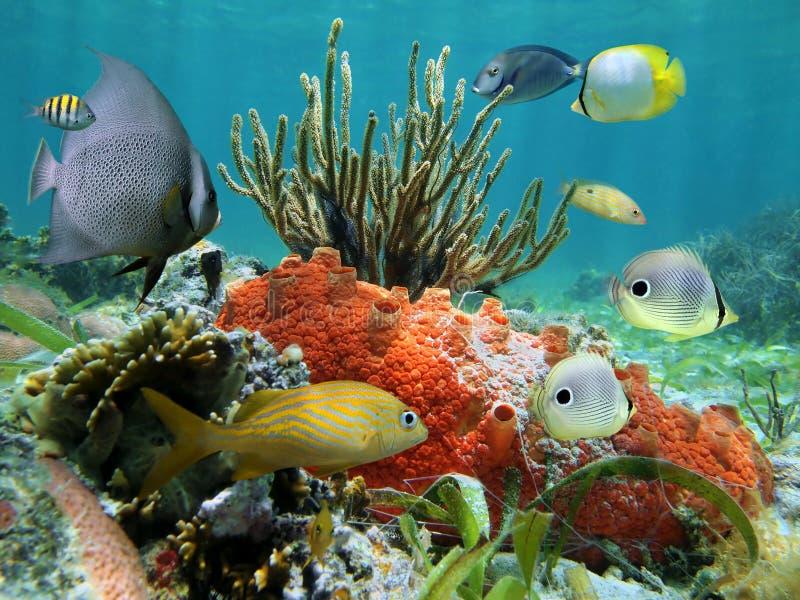 Vida subaquática de um recife coral fotografia de stock royalty free
