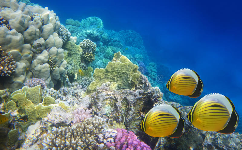 Vida subaquática de um recife do duro-coral fotografia de stock royalty free