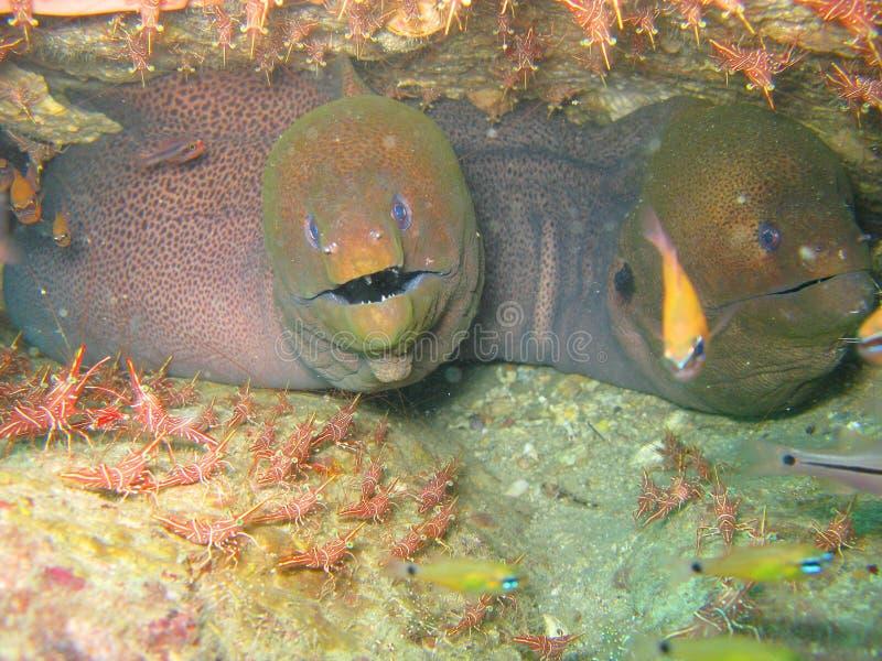 Vida subaquática no recife coral fotografia de stock