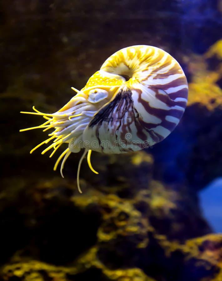 Vida subaquática tropical em um aquário do mar fotografia de stock royalty free