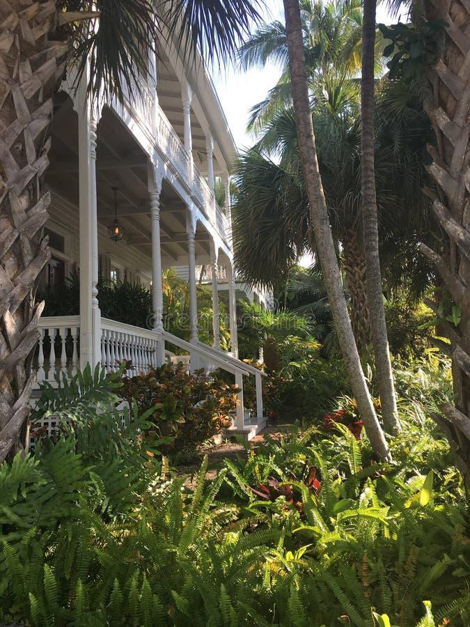 Vida tropical foto de archivo