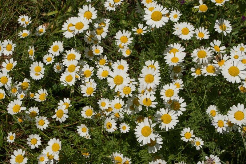 Vida vegetal 95 fotografía de archivo libre de regalías
