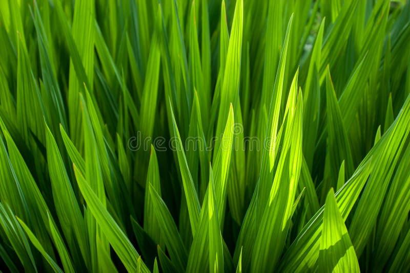 Vida vegetal 54 imagens de stock