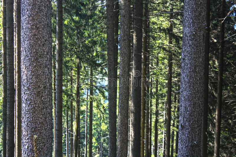 Vida vegetal fotografía de archivo libre de regalías