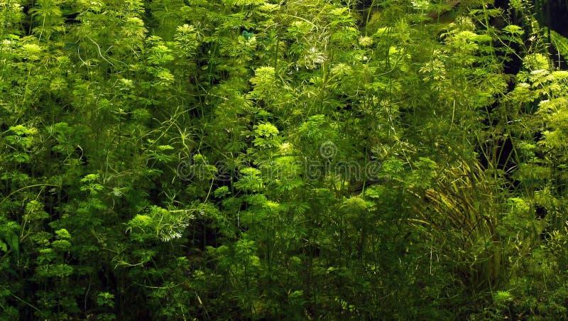 Vida vegetal subaquática foto de stock