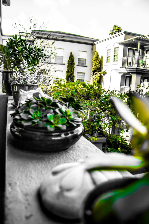 Vida verde imagem de stock royalty free