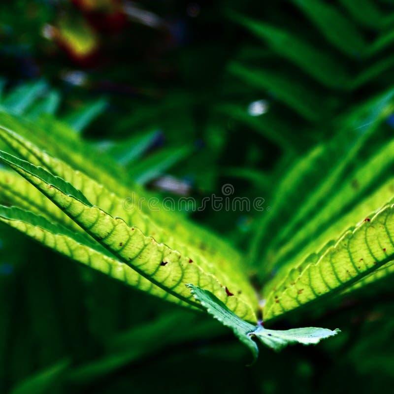 Vida verde fotografia de stock royalty free