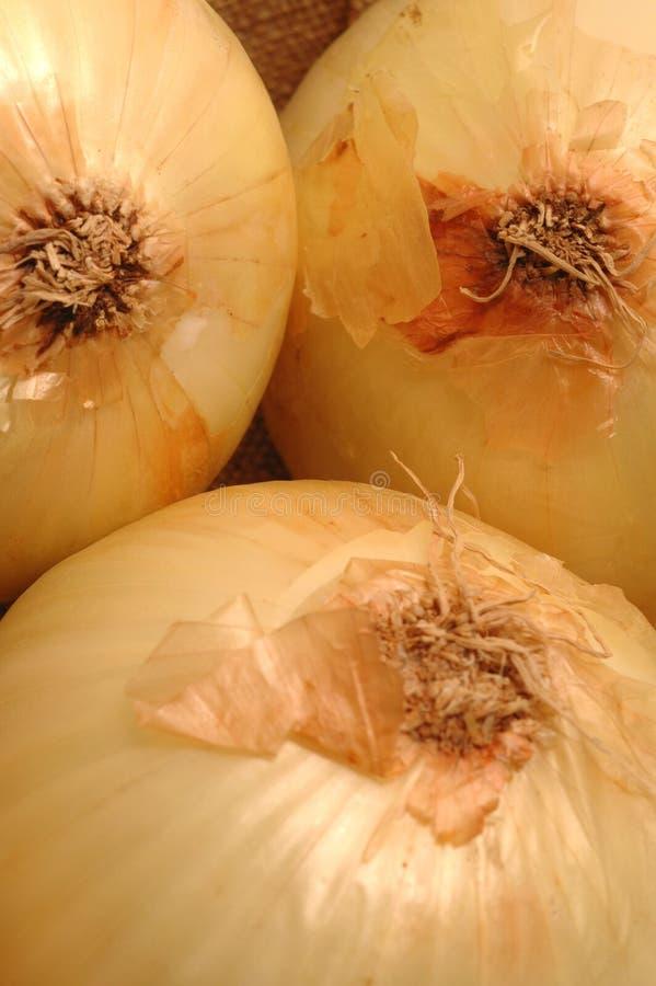 Free Vidalia Onions 1 Stock Image - 474601
