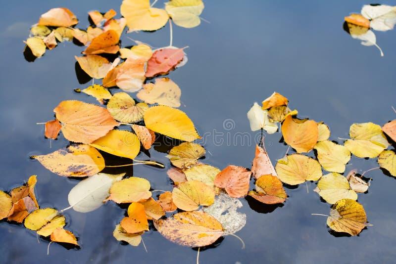 Vidas del otoño imagenes de archivo