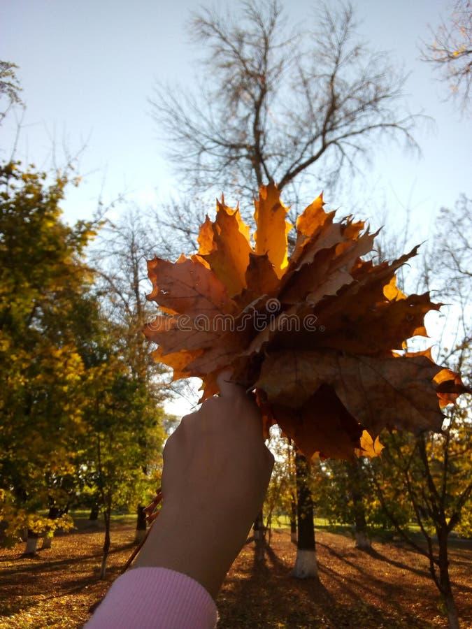 Vidas do outono fotografia de stock royalty free