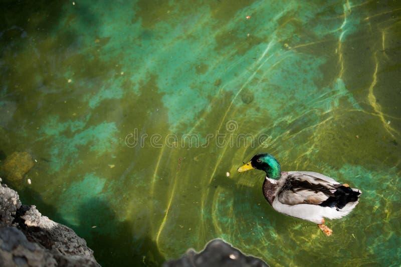 Download Vidas Sós Do Pássaro No Ambiente Natural Foto de Stock - Imagem de lagoa, liberdade: 80102392