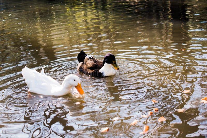 Download Vidas Sós Do Pássaro No Ambiente Natural Imagem de Stock - Imagem de fluff, pena: 80102973