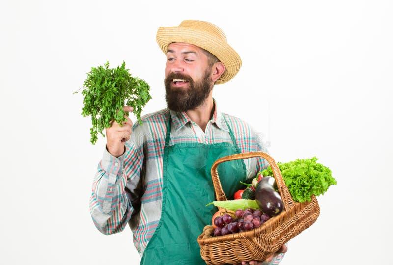Vide- korg för nya organiska grönsaker Förklädet för Hipsterträdgårdsmästarekläder bär grönsaker Mannen uppsökte framlägga grönsa royaltyfria bilder