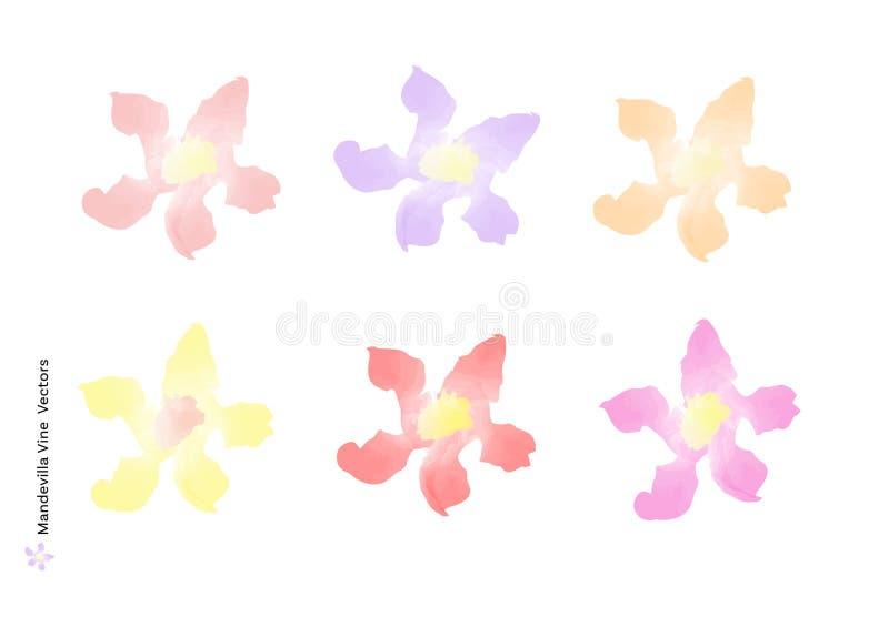 A videira do Mandevilla floresce vetores com a escova da aquarela isolada no fundo branco, projeto floral bonito do elemento para ilustração stock