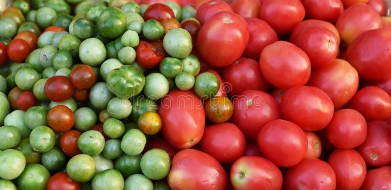 Videira do tomate imagem de stock