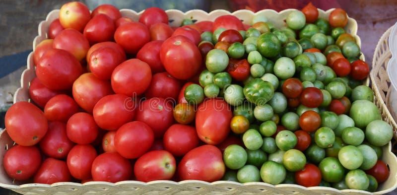 Videira do tomate fotografia de stock royalty free